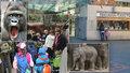 Víme, jak si užít pražskou zoo na 100 %: Bez front i levněji