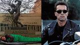 Schwarzenegger jako bezdomovec: Kde si to slavný Terminátor ustlal?