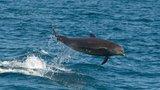 Delfíní hlídka: Rusko chce anektovaný Krym chránit mořskými savci