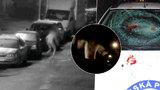 Nahý šílenec běhal po Kladně a rozbíjel auta: Jsem vlkodlak, tvrdil
