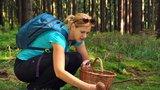 Houby na vás čekají, bude ideální počasí: 5 rad, jak sbírat jen ty jedlé, neztratit se v lese a přežít bez úrazu!