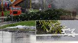 Silný vítr skácel na Mostecku vánoční strom do silnice. Vydržel jen tři dny