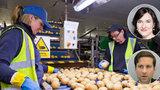 Čtyři dny práce místo pěti? Ekonomové: Trh práce se mění, ať rozhodnou firmy