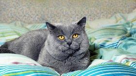 Máte tlustou kočku? Jak poznat příznaky a jaké zvolit řešení
