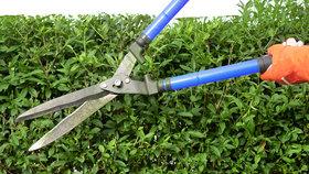 Jak vysazovat a stříhat živý plot