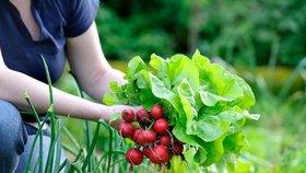 Co zasít v červenci: Vyrostou vám ředkvičky a další zelenina