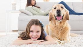 Za vysvědčení psa? 8 tipů, jak poznat zvíře z množírny