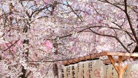 Jednoduchost, symbolika a čistota: To je asijská zahrada