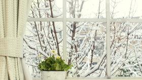 Pokojové květiny v zimě: které potřebují teplo a které naopak chlad?