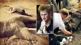 Šok pro prince Harryho: Objímal slona zabitého pytláky a zachraňoval nosorožce
