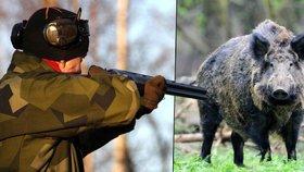 """Divoká prasata zase děsí Prahu! Půjdou na ně """"cizí"""" lovci…"""