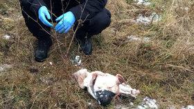 Psa někdo stáhl z kůže a uřízl mu hlavu. Policie hledá majitele