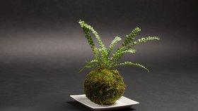 Květiny na niti: Vyrobte si doma japonskou kokedamu za pět minut a s minimem nákladů