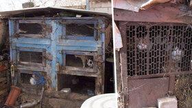 Dům hrůzy v Miloticích: Kočičí babka drží desítky zvířat v králíkárnách plných výkalů