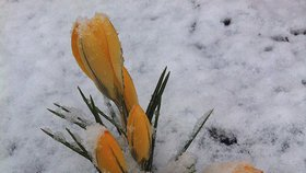 Aprílové počasí je tady: V jeden den přijde sněžení i 18 °C