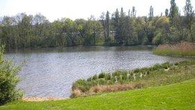 Vyrazte ještě k vodě. Kde v Praze se můžete koupat v přírodě?