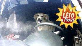 Pes ve vedru zavřený v autě? Může to být jeho smrt, nenechte ho uškvařit