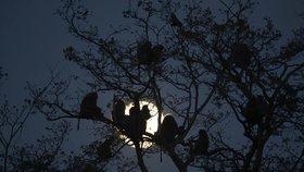 Opice způsobila masivní blackout: Elektřinu vyhodila v celé Keni