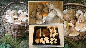 Počasí už tahá houby ze země: Pozor na záměny, otravy i pokuty