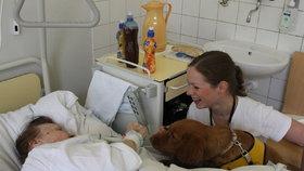 Zázračná fenka Wicky pomáhá v nemocnicích: Rozmluvila i němého pacienta