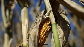 Klimatolog: Připravte se na změny, sucho v Česku zůstane
