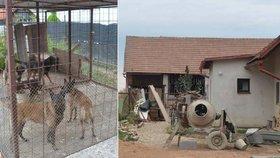 Vůdce zabijácké smečky utratíme! Majitel psů, kteří roztrhali chlapečka (†5) na Chlumecku, promluvil