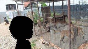 Mirečka (†5) z Lužce roztrhali psi: Policie obvinila jeho otce a majitele zvířat