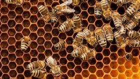Včelař chtěl zachránit hořící úl, ošklivě se při tom popálil