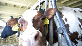 Zemědělci: Ceny mléka sice stouply, stále jsou ale pod průměrem EU