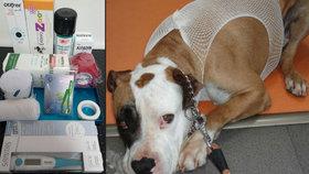Pomozte pejskovi, než bude pozdě: Co mít doma v psí lékárničce?