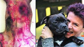 Na sídlišti Černý Most útočil divočák: Potrhal a vykastroval psa