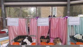 Výstava kočičích bezdomovců v Toulcově dvoře: Najdou nový domov?