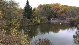 Hledá se nejkrásnější strom Prahy 4: Jako důkaz chce radnice fotografii