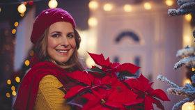 Jak pečovat o vánoční hvězdu, aby zčervenala a neopadávaly jí listy