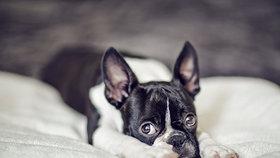 Bojí se i váš pes silvestrovských ohňostrojů?