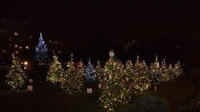 Vánoce ve Vršovicích: O víkendu tu rozsvítí vánoční strom i stromky, které zdobily děti