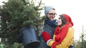 Stromek v květináči: Jak o něj pečovat, aby přežil Vánoce
