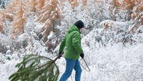 Zloději stromků mají na Hodonínsku utrum: Nesmí do lesa, hrozí tam nebezpečí úrazu