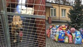 Do útulku v Troji proudily davy: Pražané opuštěným psům k Vánocům nosili krmení a dobroty
