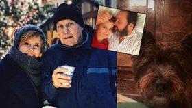 Vánoce slavných tváří: Jak si užili Štědrý večer Koktová, Hrachovcová, Hrdlička a další?