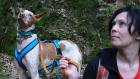 """Češky hledají domov kanárským psům: """"Jinak by je čekala smrt,"""" říkají"""