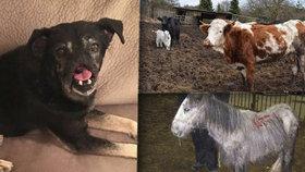 Pohřbení zaživa, násilí a hlad: Tyranům hrozí za trápení zvířat 5 let vězení