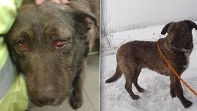 """Bojar může vrtět ocasem. Psa krutě zahrabaného do sněhu si našli noví """"páníčci"""""""