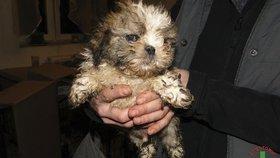 Výbor dal zelenou povinnému čipování psů. Má bojovat proti množírnám