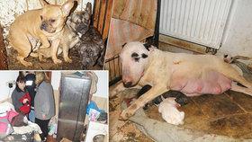 V množírně žilo ve 3 místnostech 170 psů a koček: Tady se mohlo narodit i vaše štěně