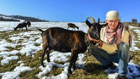 Staré nebo postižené kozy zachraňuje před hrozným osudem: Skončily by v salámu