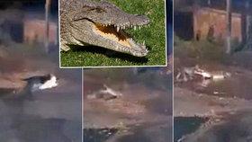 Krokodýl roztrhal psa na kusy před jeho páníčky. Z bolestivého kňučení běhá mráz po zádech