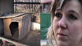 Vražda psa pod okny majitelů: Mrtvé zvíře sadista táhl přes celou zahradu, pak zmizelo