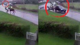 Příšerné video: Řidič si spletl jízdní pruhy a smetl koně i s jezdci