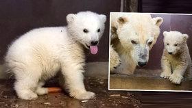 Velký smutek v berlínské zoo: Rozkošný medvídek Fritz náhle zemřel!